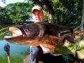 wallago_atu_fishing_thailand_chiang_mai