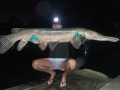 alligator_gar_1