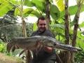 alligator_gar_15