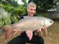 rohu_indian_carp_dreamlake