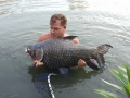 siamese_carp_matt_jones_dreamlake