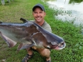 giant_mekong_catfish_borsang_lake