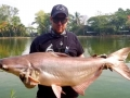 giant_mekong_catfish_borsang_lake_8