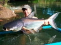 giant_mekong_catfish_dreamlake