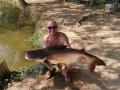Liam_fountain_borsang_striped_catfish