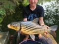 julian_golden_price_carp_dreamlake_3