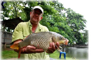 Common carp Cyprinus carpio in Thailand