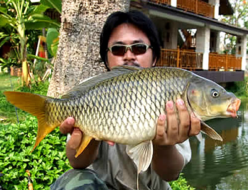 Common carp caught fishing in Thailand
