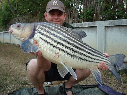 Rare carp, Peacock bass and Alligator gar.