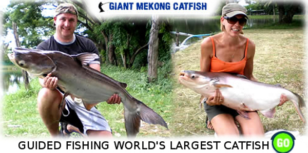 Fishing in Thailand at Paradise catfish lake