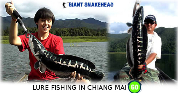 Snakehead lure fishing in Thailand