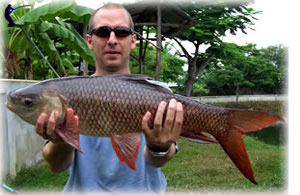 Rohu or Indian carp fishing in Thailand