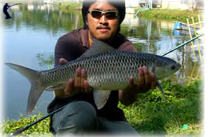 Related Keywords & Suggestions for Mud Carp