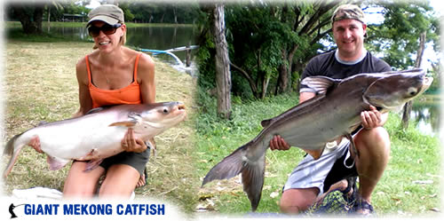 Chiang mai catfish fishing