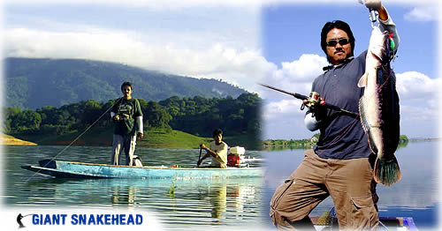 Giant snakehead fishing trip from Chiang mai Thailand.