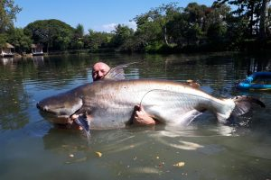 Monster Chao Phraya catfish catch report