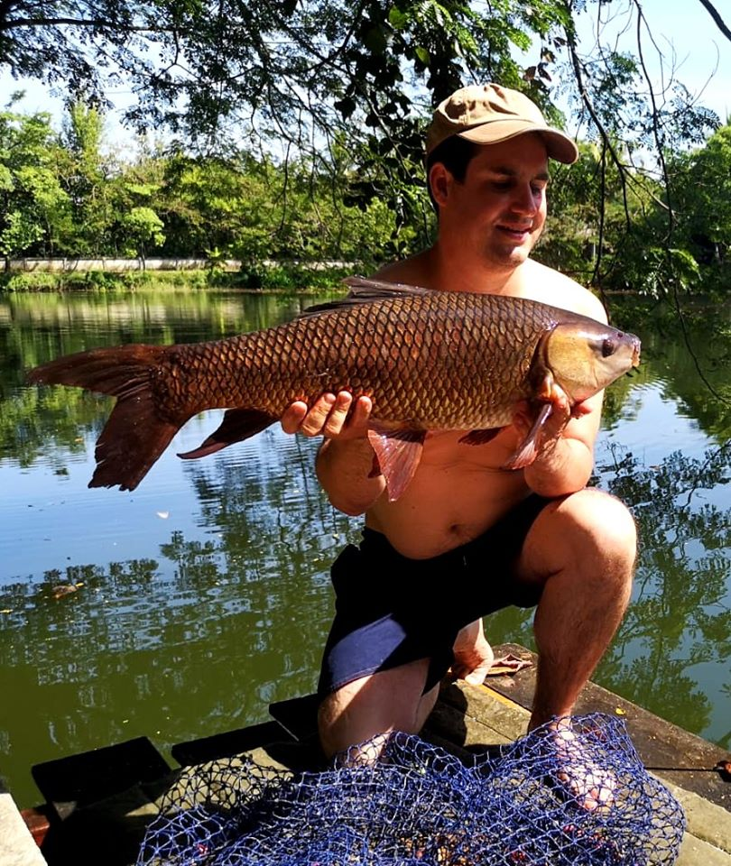 Rohu carp Dreamlake Fishing resort Thailand