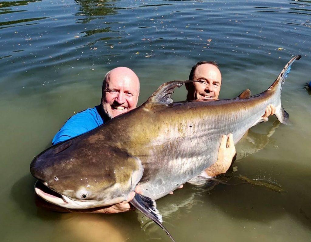 Massive monster Chao phraya catfish