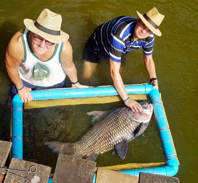 Giant siamese carp caught at Dreamlake fishing resort Chiang mai