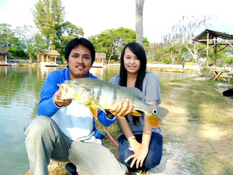 Fishing in Thailand - Peacock Bass