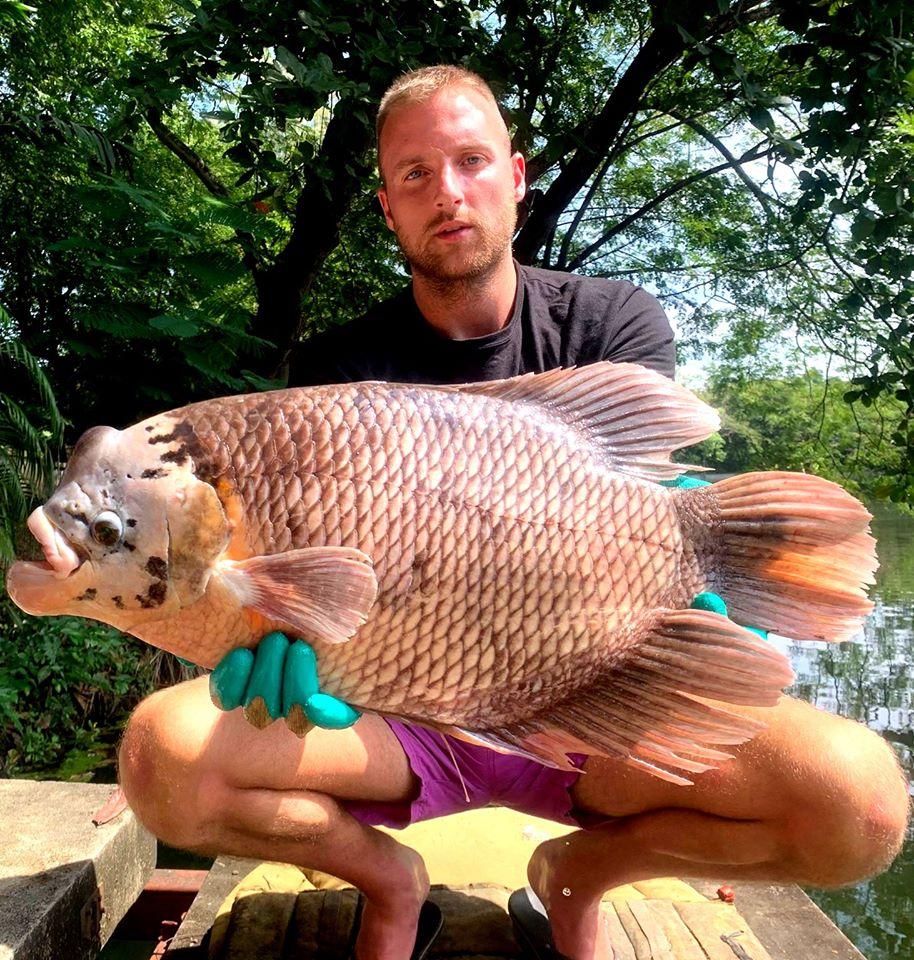 gouramy_dreamlake_Chiang_mai_fishing_thailand