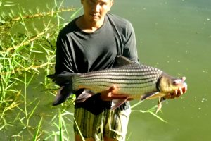 Fishing in Thailand – New fish stock at Dreamlake Resort: Twelve Julliens Golden Price Carp